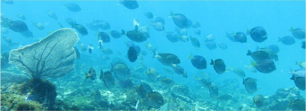Les eaux poissonneuses de la baie d'Oracabessa